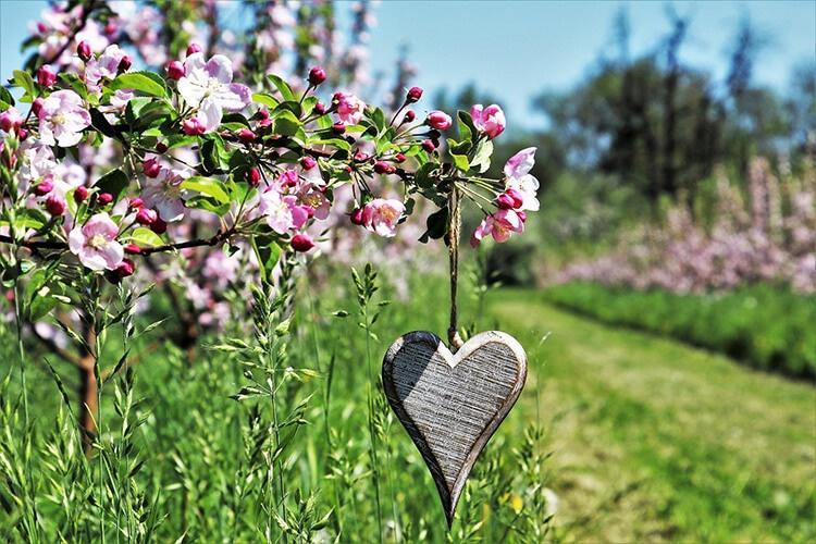 köyde bahar, doğal yaşam, baharın güzellikleri