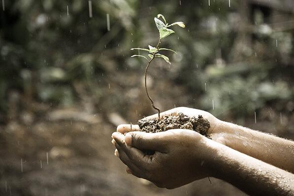 doğal yaşam, köyde organik yaşam
