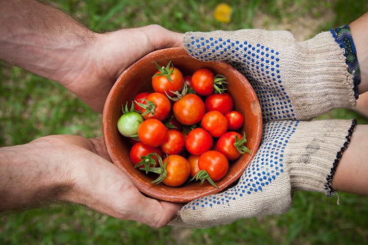 domates, doğal yaşam, köyde organik yaşam