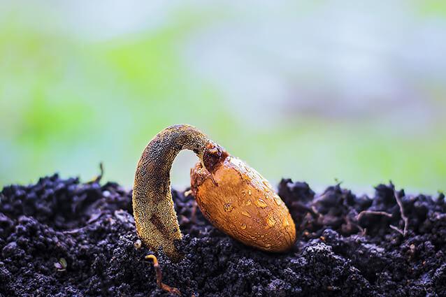 Organik Fide Yetiştirme Zamanı Geldi
