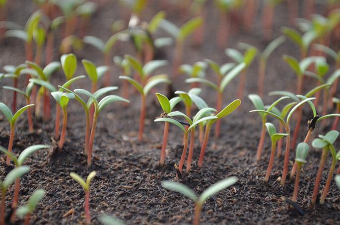 organik fide ekimi, doğal yaşam, digital yazarlar