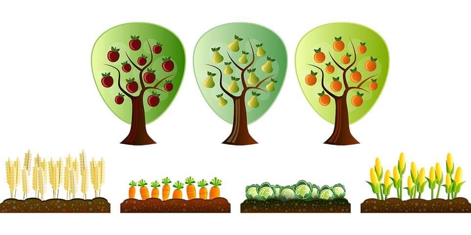 organik gübre, sebze,meyve, organik yaşam, köy hayatı