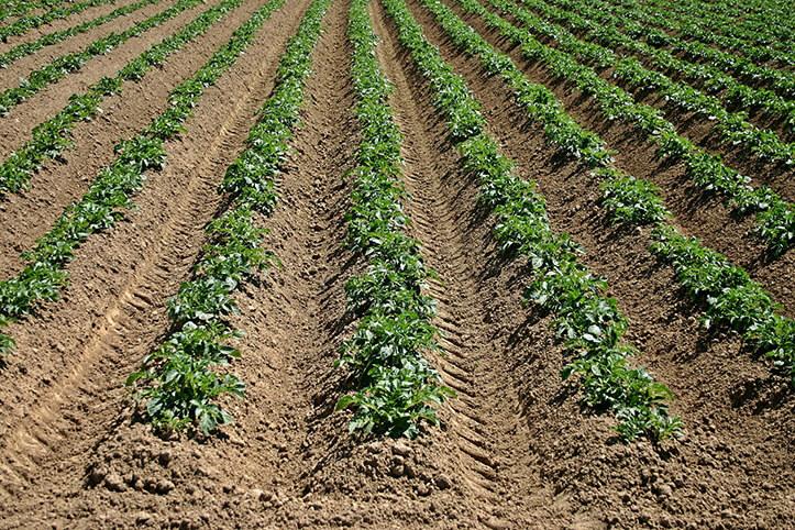 Sebze Meyve Yetiştiriciliği İle İlgili Önemli İpuçları