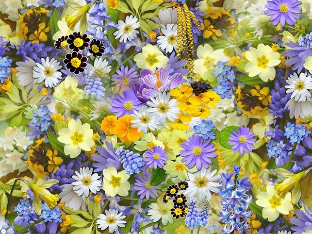 Bahçe Zararlıları İçin Bir Çiçek Ekin