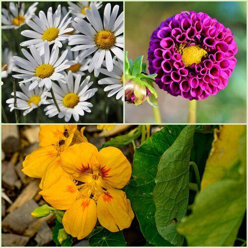 Bahçe zararlıları için doğal çözümler