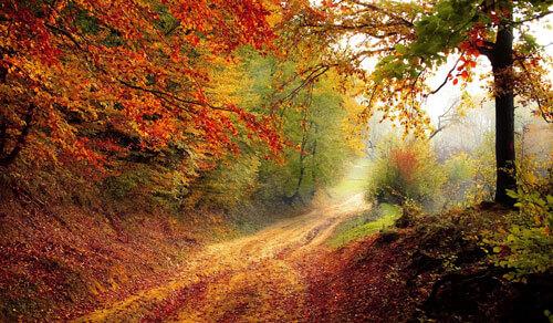 Köyde Sonbahar Zamanı Neler Yapılır?