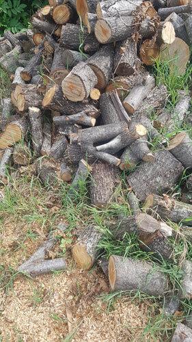 köyde sonbahar, odun kesimi