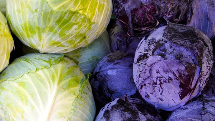 lahana yetiştiriciliği, lahanalar