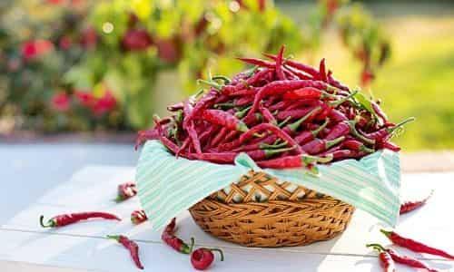 kırmızı biber, biber, bahçede biber