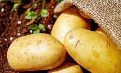 balkonda patates yetiştirmek