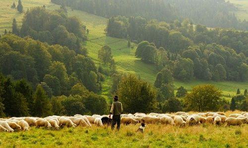 köyde karantina günlüğü, çoban