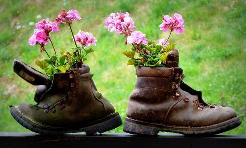 yaz çiçekleri botun içinde