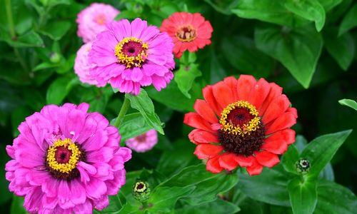 yaz çiçekleri, yaz çiçekleri nelerdir, yaz çiçeği, papatyalar,